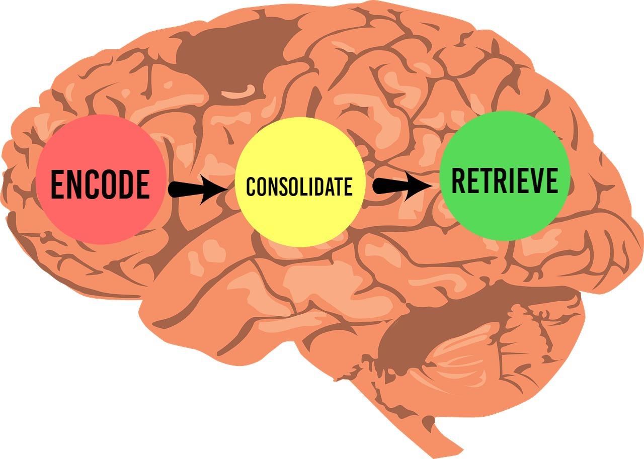 brain-308580_1280 (1)